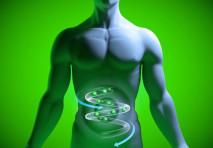 La flora batterica intestinale: come aiutare i batteri buoni per moderare il picco glicemico